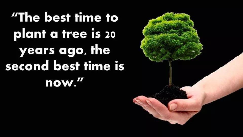 plant tree 20 years ago